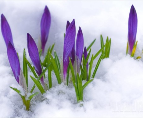 От всей души поздравляем Вас с началом весны!